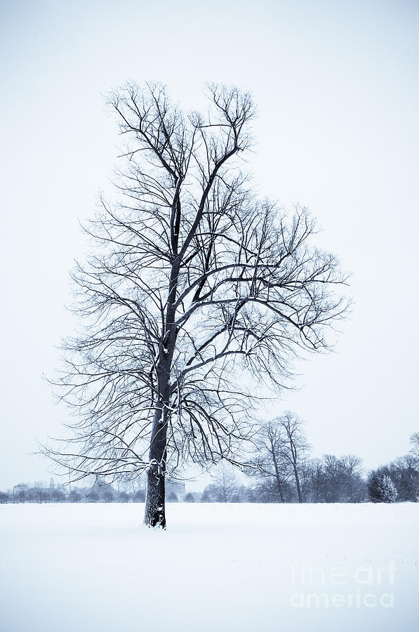 B&w Photograph - Tree In Snow by Lana Enderle