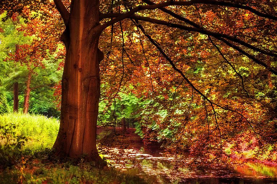 Utrecht Photograph - Tree In The Park. De Haar Castle. Utrecht  by Jenny Rainbow