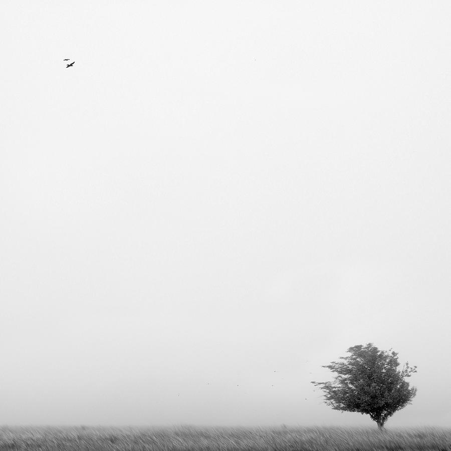Landscape Photograph - Tree In The Wind by Mike McGlothlen