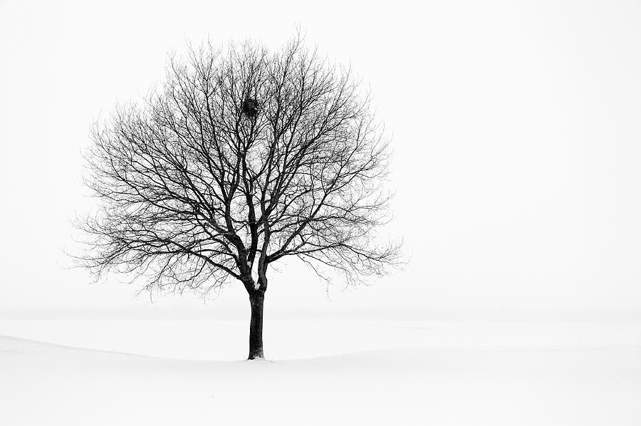 Tree In Winter Landscape, Black And Photograph by Nikitje