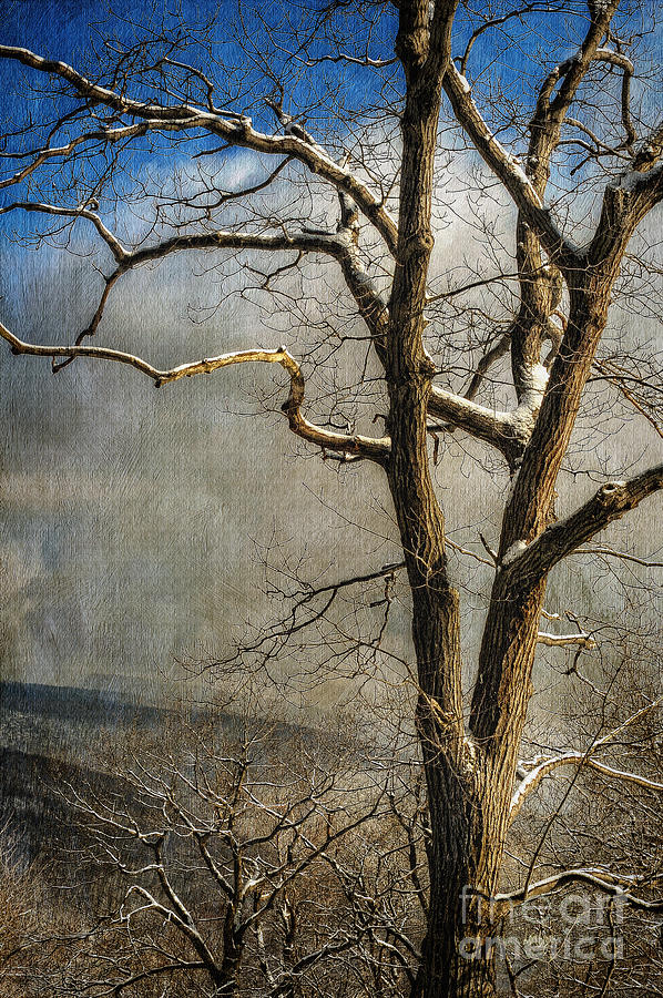 Winter Photograph - Tree In Winter by Lois Bryan