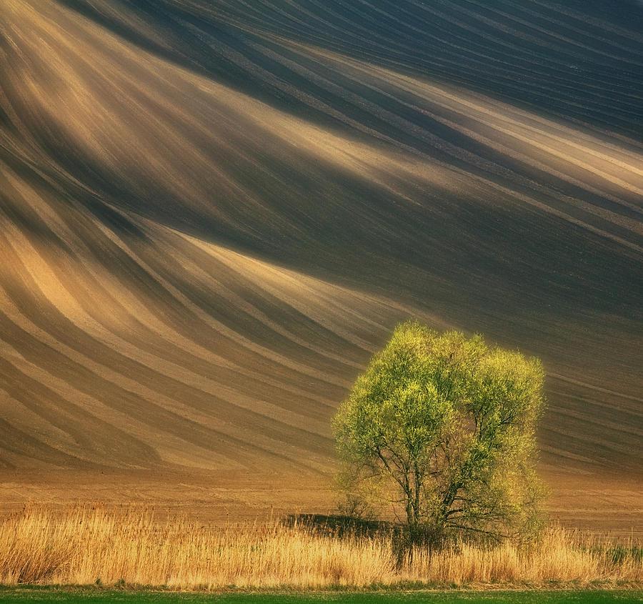 Slope Photograph - Tree... by Krzysztof Browko