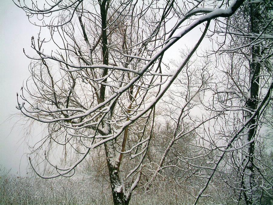 Landscape. Treescape. Photograph Of Snow Covered Tree Photograph - Tree Lace by Desline Vitto