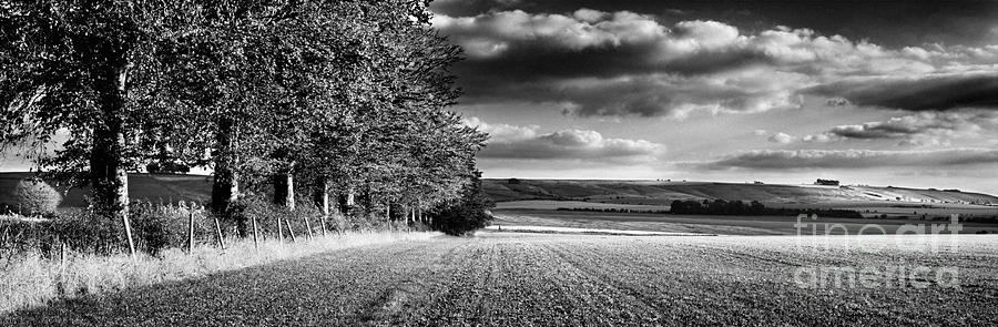 Tree Line Photograph - Tree Line by Rod McLean