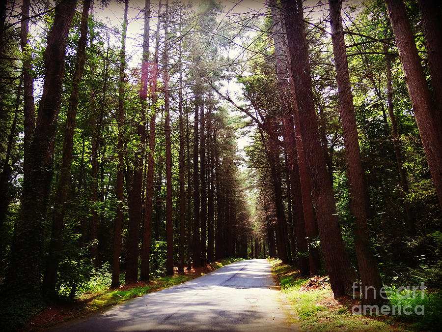Tree-lined Road Photograph - Tree Lined Road by Crystal Joy Photography