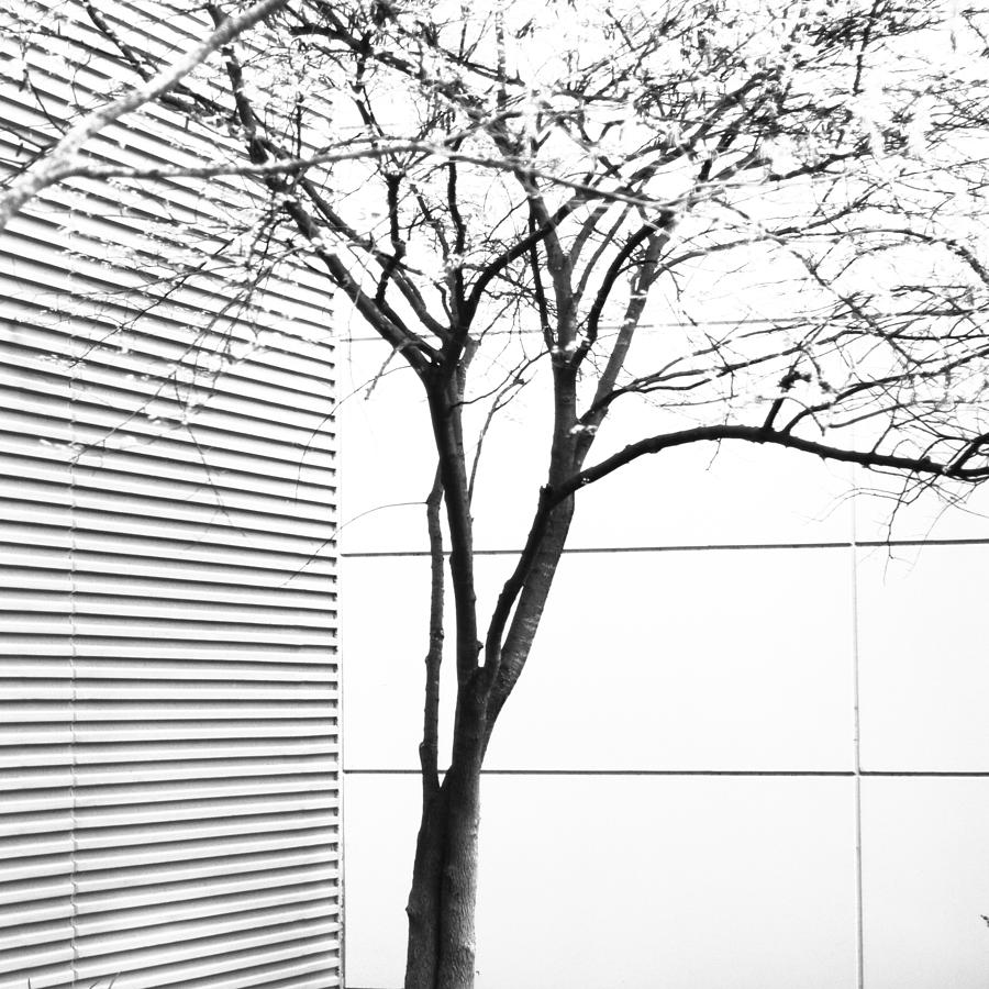 Abstract Photograph - Tree Lines by Darryl Dalton