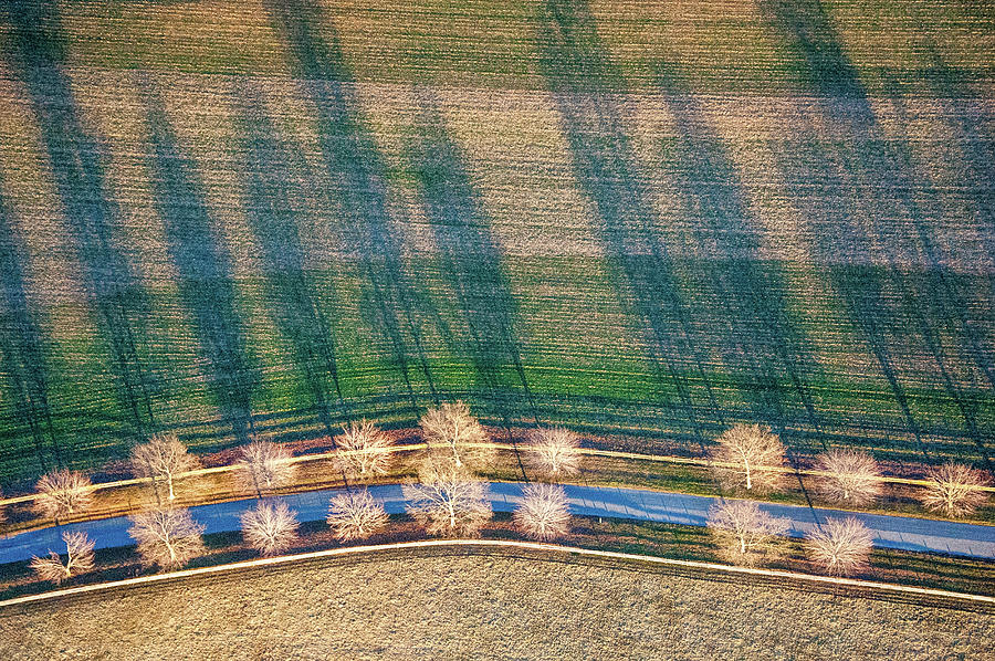 Tree Lines Photograph by Edwin Remsberg