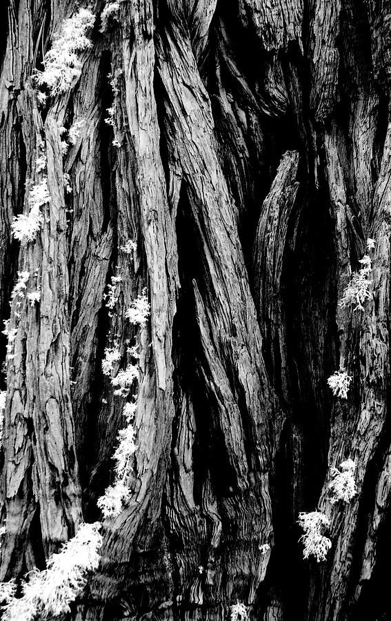 Tree Photograph - Tree Lines by Mick Burkey