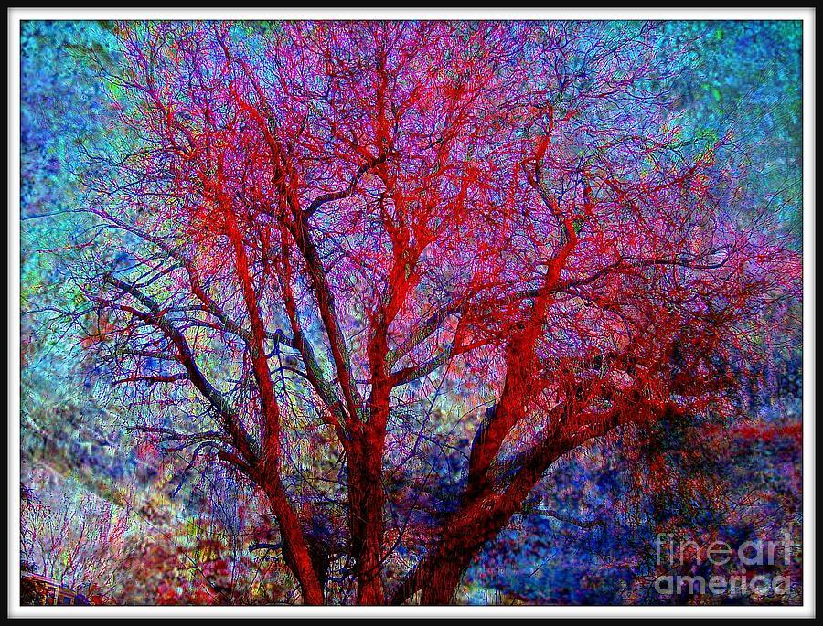 Tree Photograph - Tree by Lisa Van der Plas