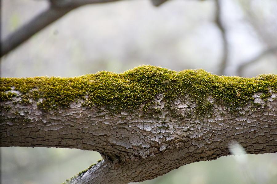 Moss Photograph - Tree Moss by Mark Holden