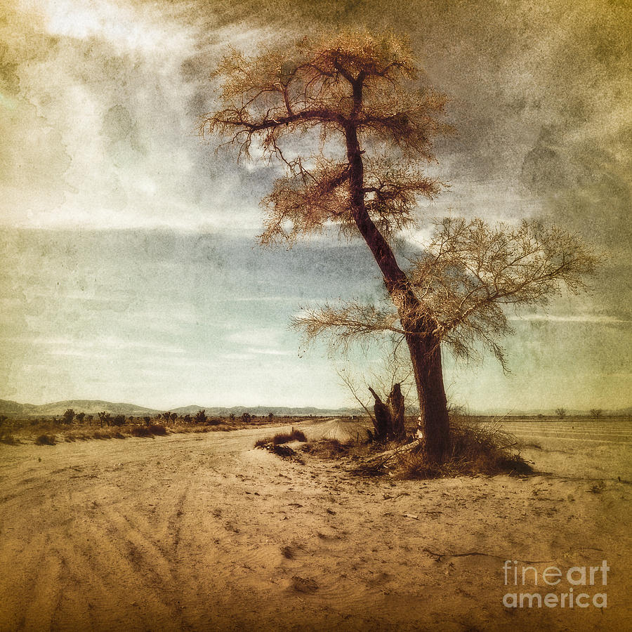 Photograph - Tree Near The Road by Pam Vick