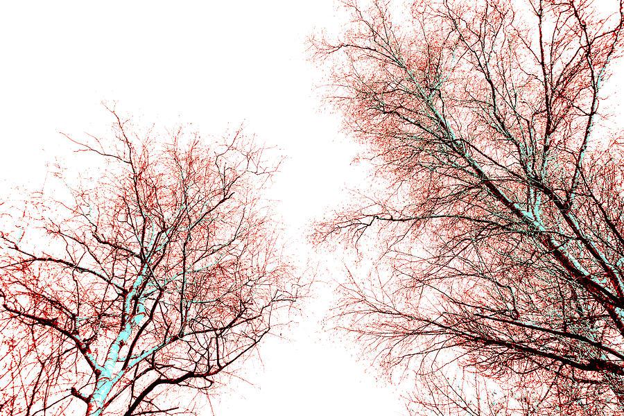 Red Pyrography - Tree by Nina Peterka