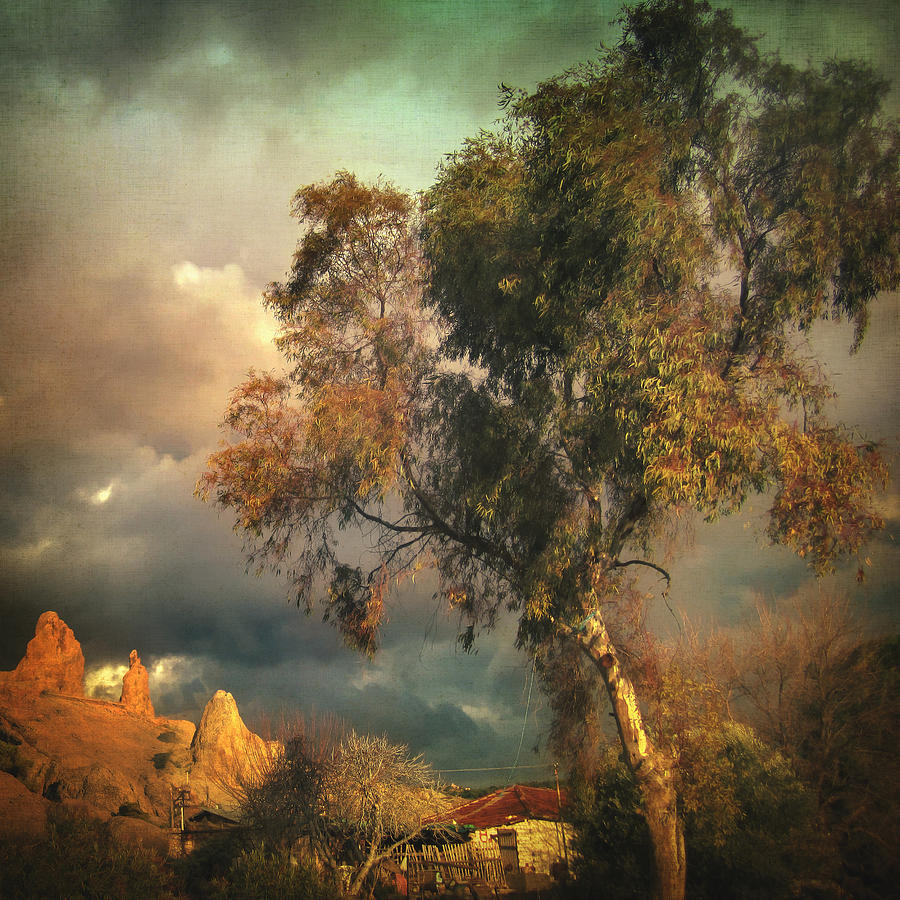 Tree Photograph - Tree Of Confusion by Taylan Apukovska