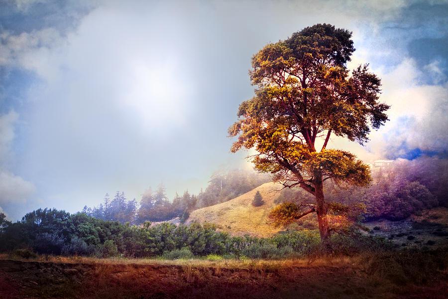Clouds Photograph - Tree Of Dreams by Debra and Dave Vanderlaan