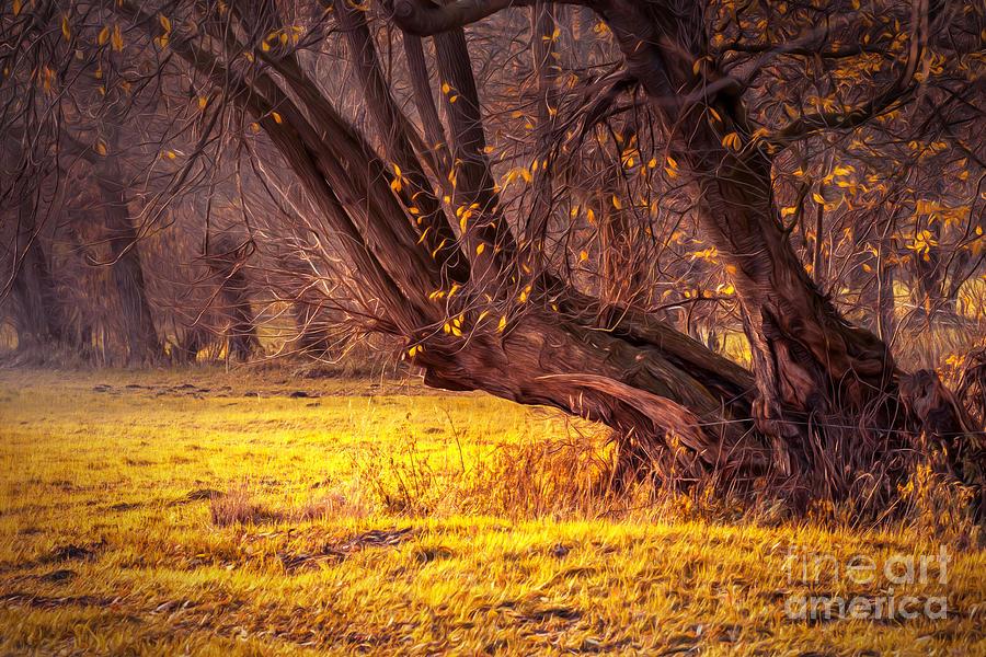 Tree Of Fall Photograph