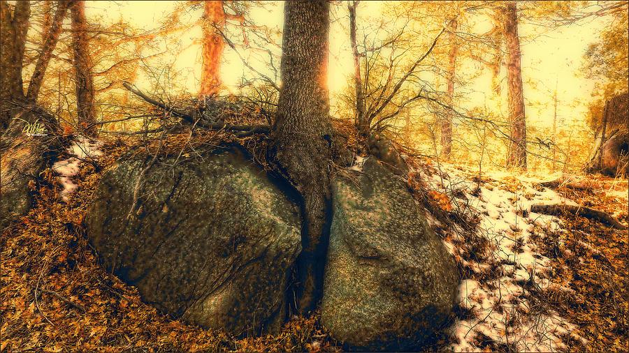 Landscape Photograph - Tree Of Inspiration by Douglas MooreZart