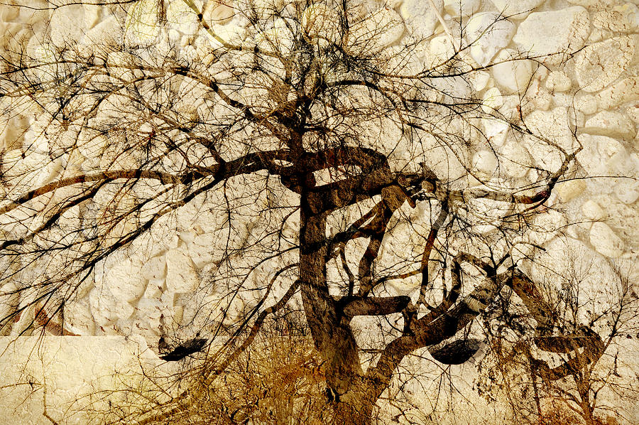 Tree Photograph - Tree Of Life  by Ann Powell
