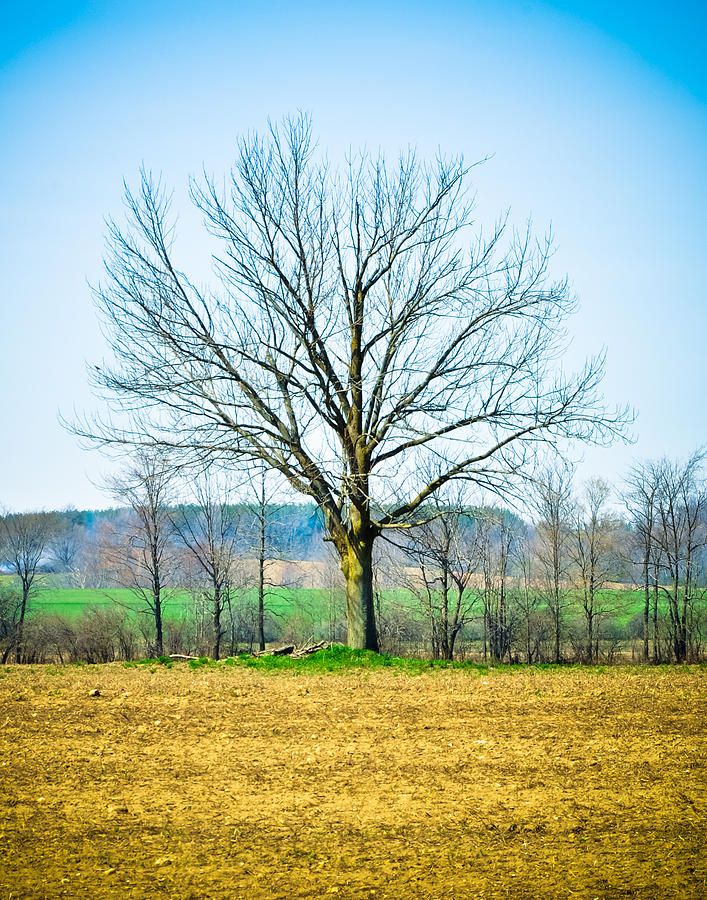 Tree Photograph - Tree Of Life by BandC  Photography