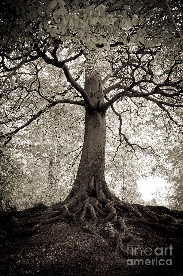 Tree Photograph - Tree Of Life by Dominique De Leeuw