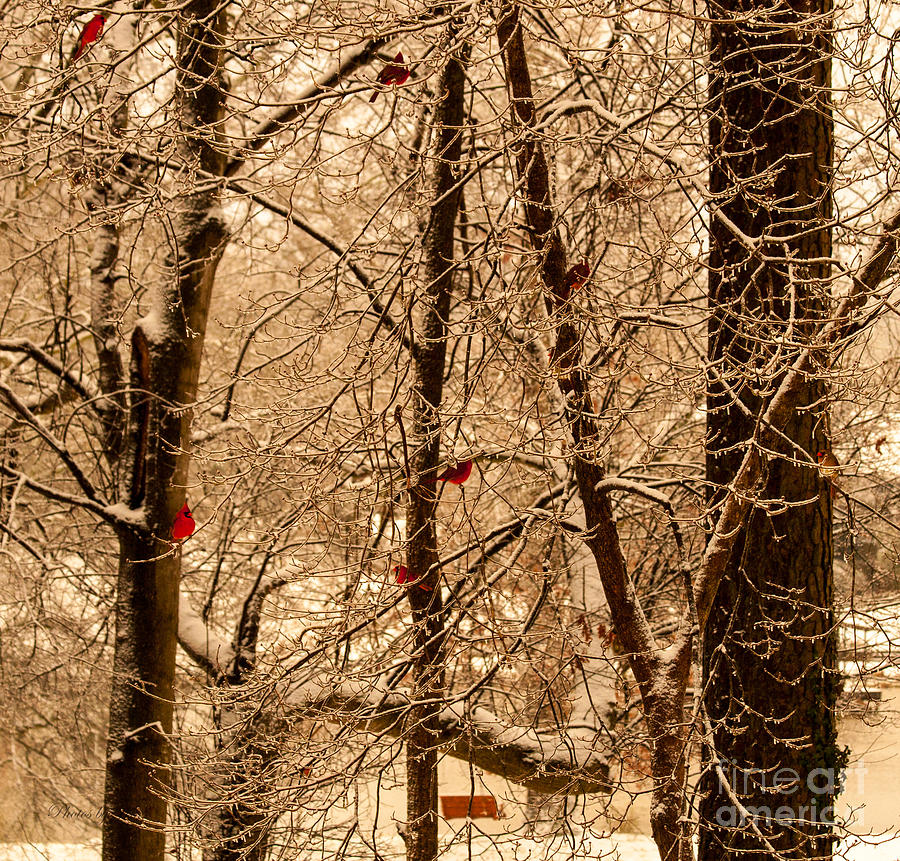 Red Bird Photograph - Tree Of Life by Jinx Farmer