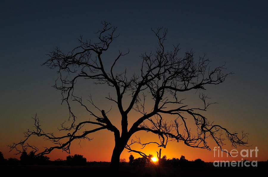 Tree Photograph - Tree of Life Sunlit Oracle Card by Coralie Plozza