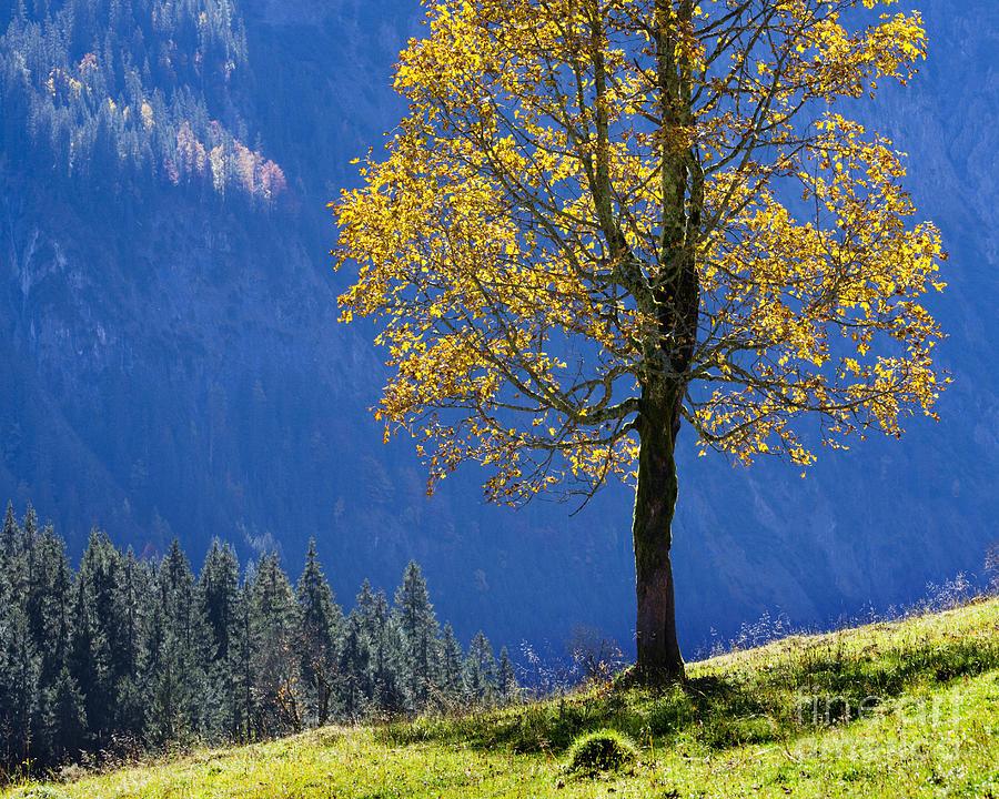 Single Photograph - Tree Of Seasons by Edmund Nagele