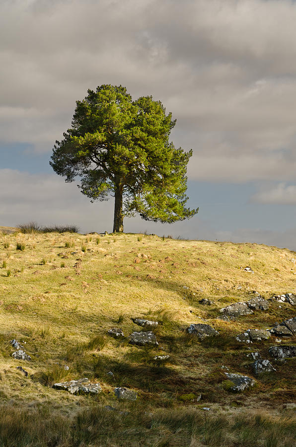 Countryside Photograph - Tree On A Hill Vertical by David Head