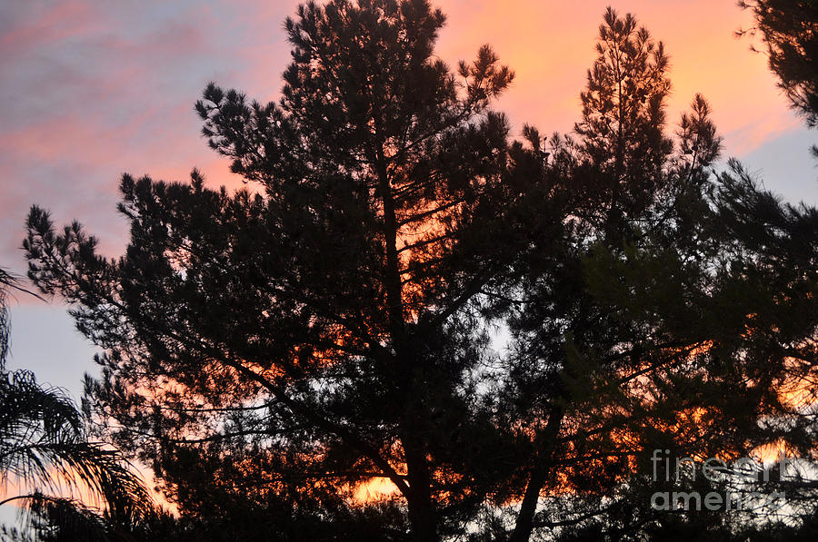 Tree Photograph - Tree On Fire by Jay Milo