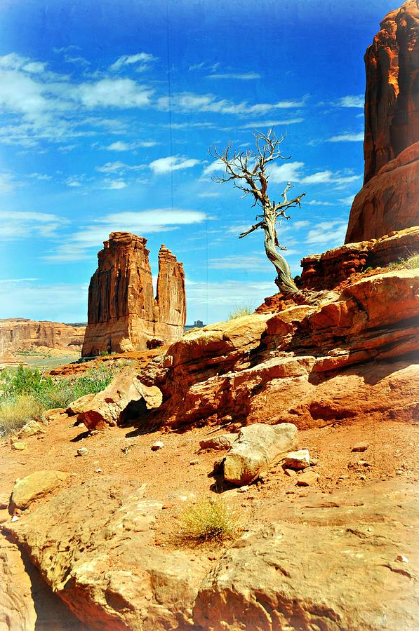 Arches National Park Photograph - Tree On Park Avenue by Marty Koch