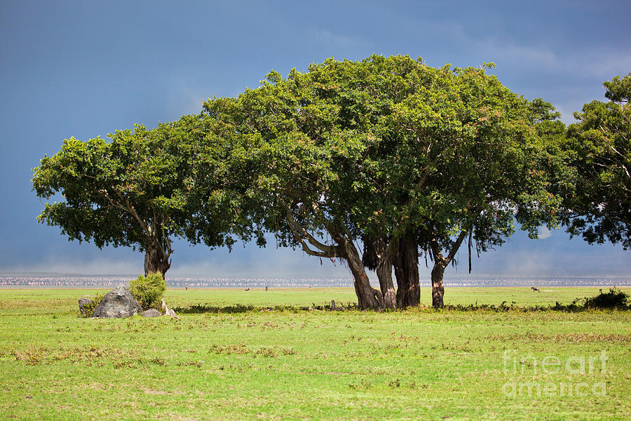 Tree On Savannah. Ngorongoro In Tanzania Photograph by