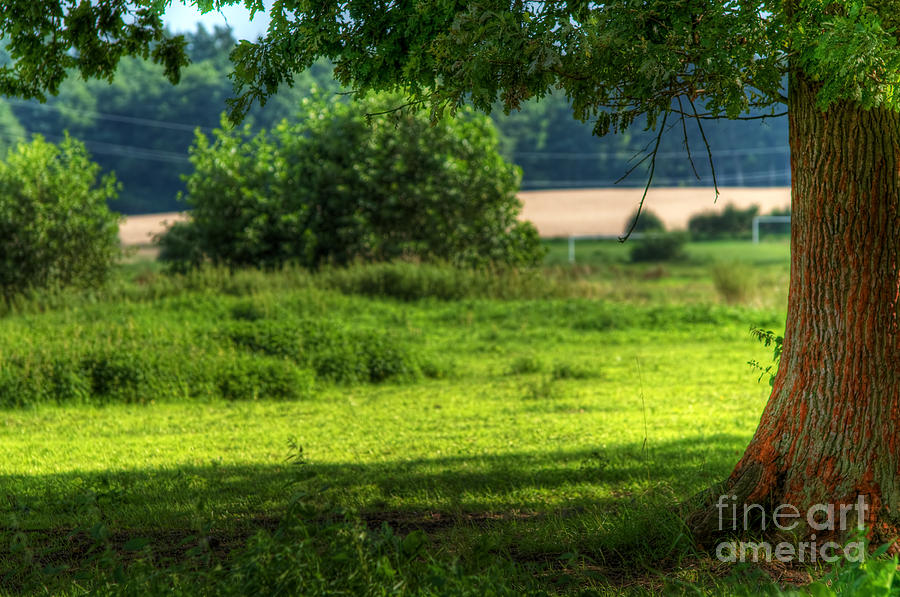 Agriculture Photograph - Tree On Summer Field by Michal Bednarek