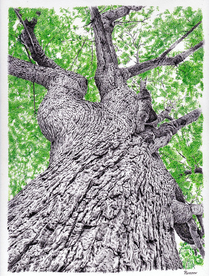 Tree Drawing - Tree Pen Drawing 4 by Remrov