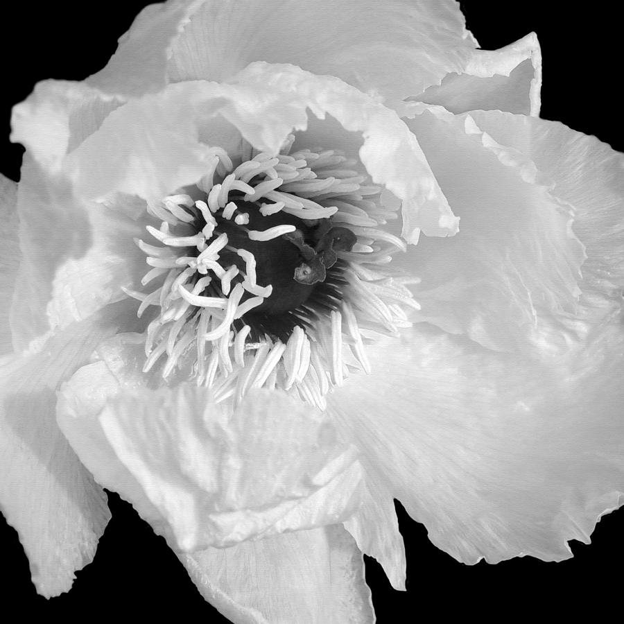 Black And White Flowers Photograph - Tree Peony Close Up Black And White by Gill Billington