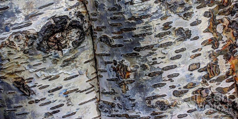Organic Photograph - Tree People by Heidi Smith