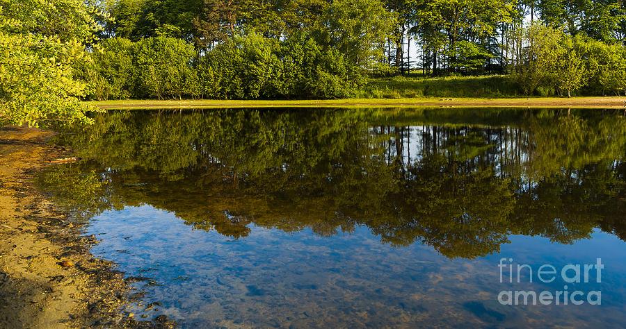 Bay Photograph - Tree Reflections by Svetlana Sewell