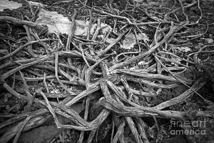 Tree Photograph - Tree Remains by Charline Xia