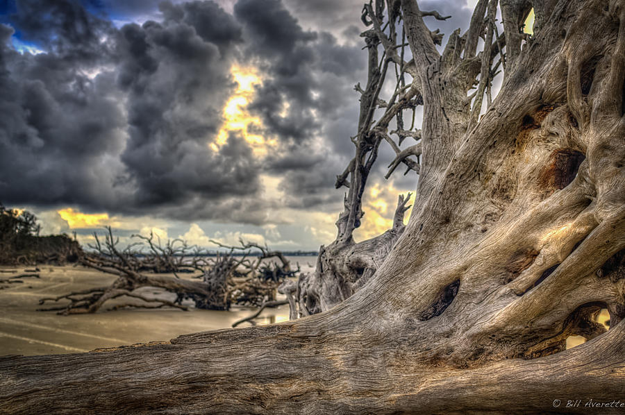 Tree Scapes by Bill Averette