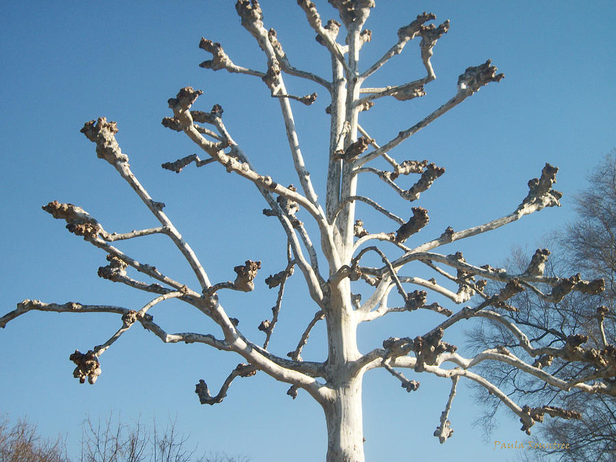 Tree Photograph - Tree Sculpture by Paula Rountree Bischoff