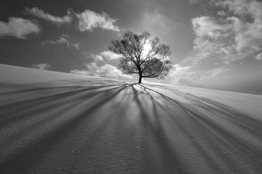 Landscape Photograph - Tree Shadow by Kengo Shibutani