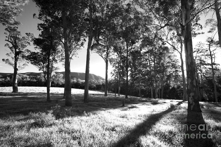 Tree Shadows Photograph by David Benson