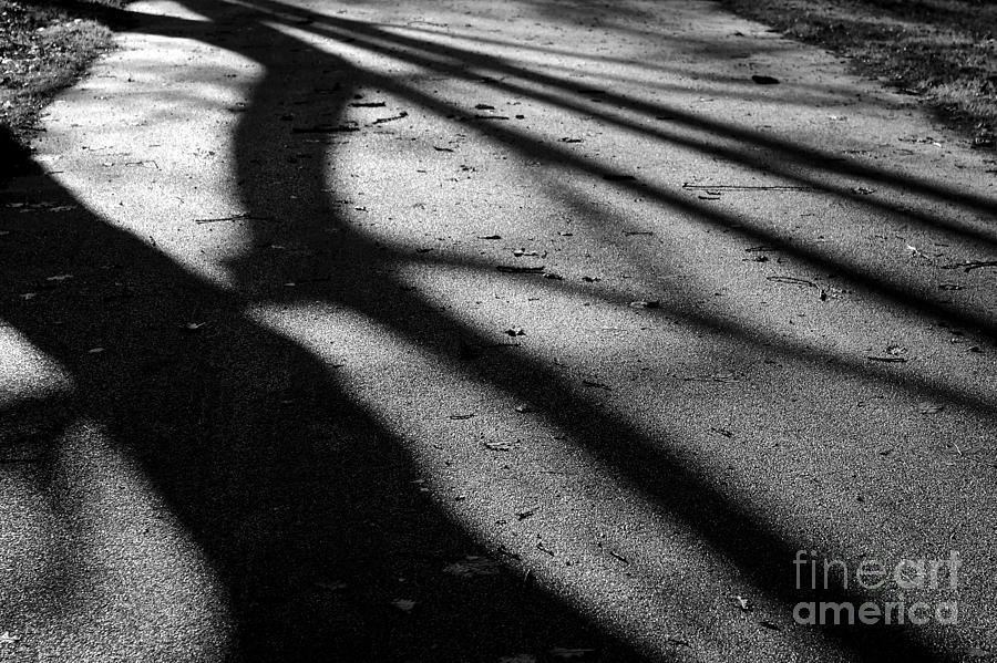 Shadows Photograph - Tree Shadows by Paul Muscat