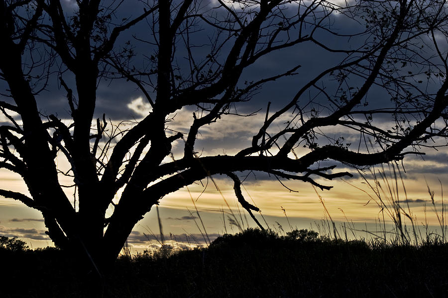 Tree Photograph - Tree Silhouette by Mark Russell