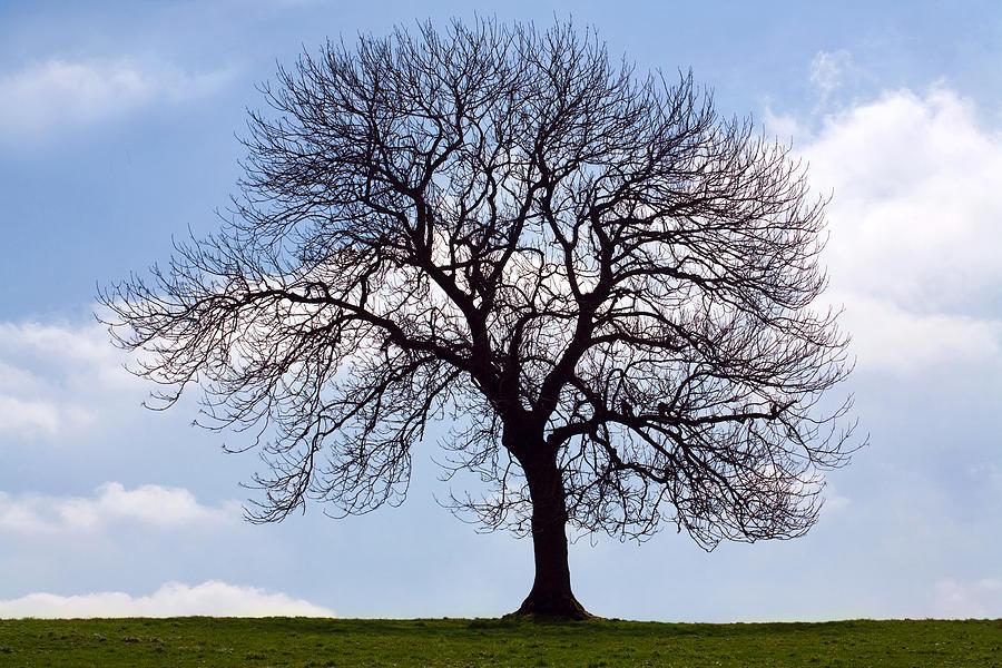 Tree Photograph - Tree Silhouette by Natalie Kinnear