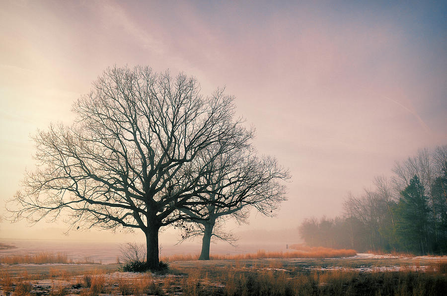 Fog Photograph - Tree Sunlight Fog by Beth Sawickie