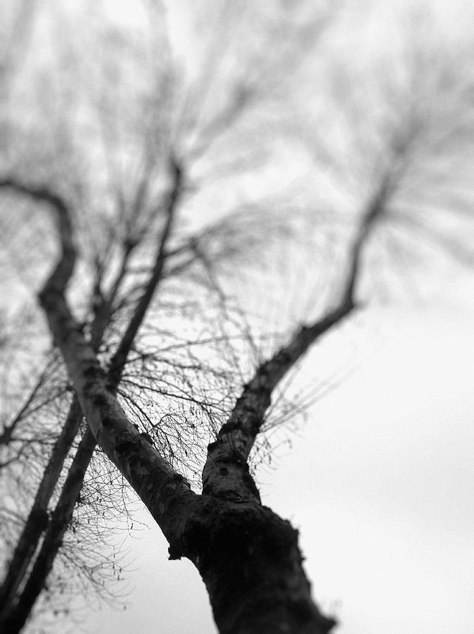 Tree Photograph - Tree by Taylan Apukovska
