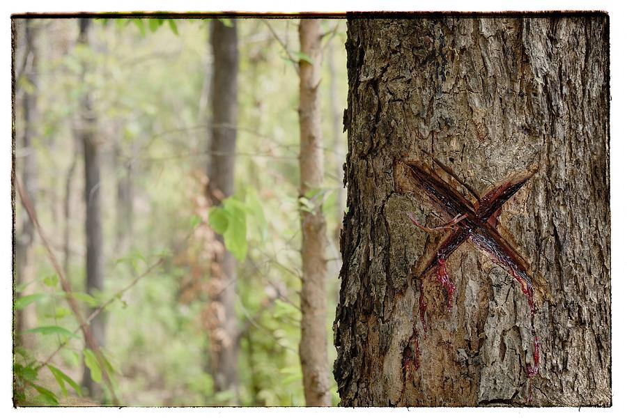 X Photograph - Tree That Bleeds X by River Engel