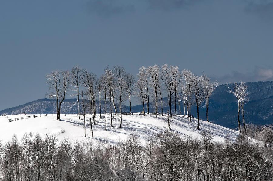 Snow Photograph - Tree Topper Hill by John Haldane
