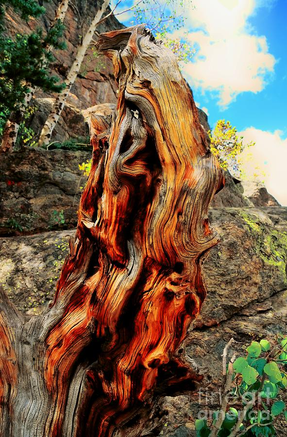 Tree Photograph - Tree Trunk by Kathleen Struckle