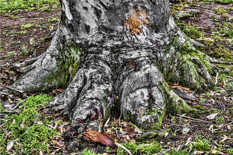 Tree Digital Art - Tree Trunk by Photographic Art by Russel Ray Photos