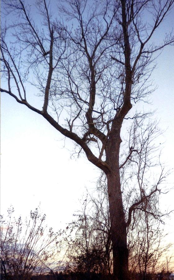 Tree Photograph - Tree by Valerie Howell